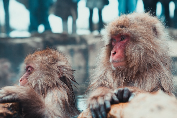 Healthy cloned monkeys born in Shanghai